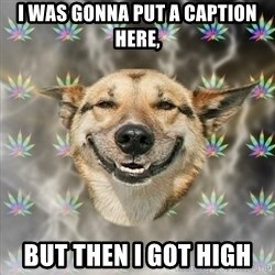 Stoner Dog - I was gonna put a caption here, but then I got high