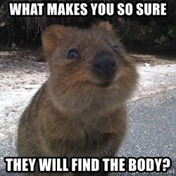 Seemingly Innocent Quokka - What makes you so sure they will find the body?