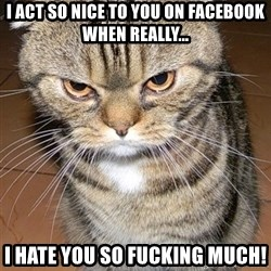 angry cat 2 - I ACT SO NICE TO YOU ON FACEBOOK WHEN REALLY... I HATE YOU SO FUCKING MUCH!