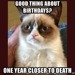 Tard the Grumpy Cat - good thing about birthdays? one year closer to death