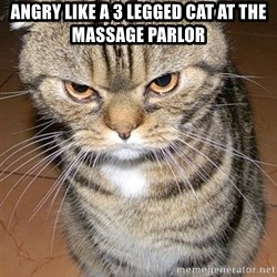 angry cat 2 - Angry like a 3 legged cat at the massage parlor