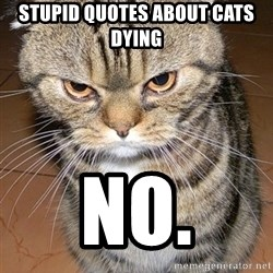 angry cat 2 - STUPId QUOTES ABOUT CATS DYING NO.