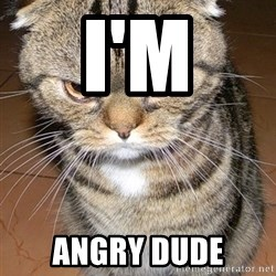 angry cat 2 - I'M ANGRY DUDE