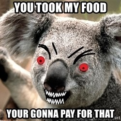 Abortion Koala - YOU TOOK MY FOOD  YOUR GONNA PAY FOR THAT