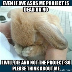 Bunny cry - even if ave asks me project is dead or no I will die and not the project, so please think about me