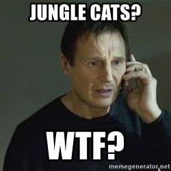 I don't know who you are... - JUNGLE CATS? WTF?