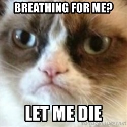 angry cat asshole - Breathing for me? Let me die