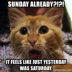 Crazy cat - Sunday already?!?! it feels like just yesterday was saturday.