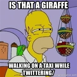 Simpsons' Homer - is that a giraffe  walking on a taxi while twittering/