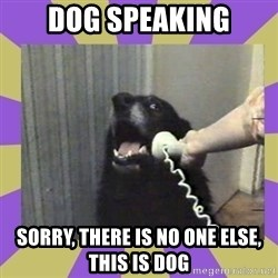 Yes, this is dog! - dog speaking sorry, there is no one else, this is dog