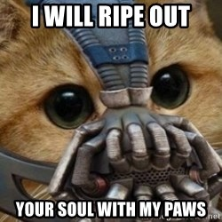 bane cat - I WILL RIPE OUT YOUR SOUL WITH MY PAWS