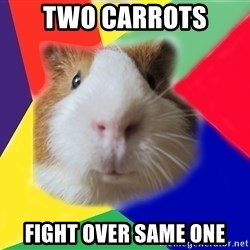 Typical guinea pig - two carrots fight over same one