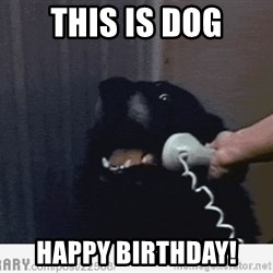 Hello This is Dog - This is dog happy birthday!