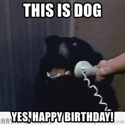 Hello This is Dog - this is dog yes, happy birthday!