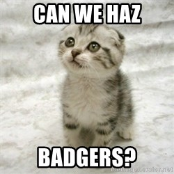 Can haz cat - can we haz badgers?