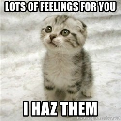 Can haz cat - Lots of feelings for you I haz them