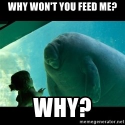 Overlord Manatee - why won't you feed me? why?