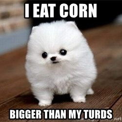 more meat for my duck - i eat corn bigger than my turds