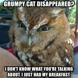Overly Angry Owl - Grumpy cat Disappeared? I don't know what you're talking about. i just had my breakfast.