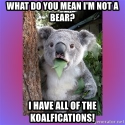 Koala Surprise - What do you mean I'm not a bear?  I have all of the koalfications!