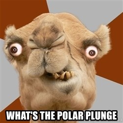 Crazy Camel lol -  WHAT'S THE POLAR PLUNGE