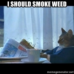 Thinking Cat - I should smoke weed