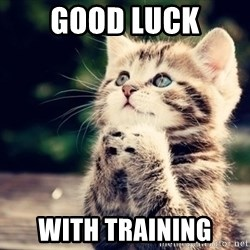 good luck cat - Good luck with training
