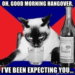 Alco-cat - Oh, good morning hangover. I've been expecting you...