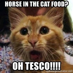 Crazy cat - horse in the cat food? oh Tesco!!!!