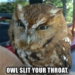 Overly Angry Owl -  Owl slit your throat.