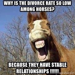 Horse - Why is the divorce rate so low among horses? because they have stable relationships !!!!!!