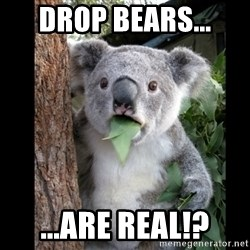 Koala can't believe it - drop bears... ...are real!?