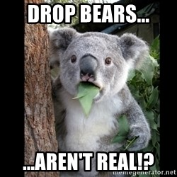 Koala can't believe it - drop bears... ...aren't real!?