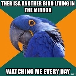 Paranoid Parrot - ther isa another bird living in the mirror watching me every day