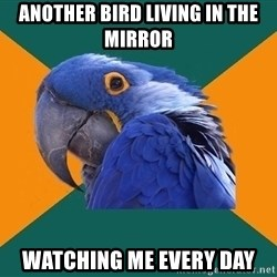 Paranoid Parrot - another bird living in the mirror watching me every day
