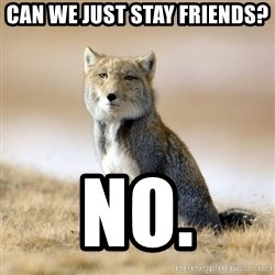 Disappointed Tibetan Fox - can we just stay friends? no.