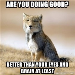 Disappointed Tibetan Fox - are you doing good? better than your eyes and brain at least
