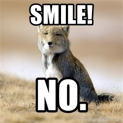 Disappointed Tibetan Fox - smile! no.