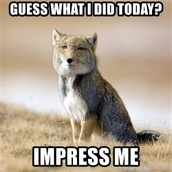 Disappointed Tibetan Fox - guess what i did today? impress me