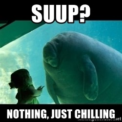 Overlord Manatee - SUUP? NOTHING, JUST CHILLING
