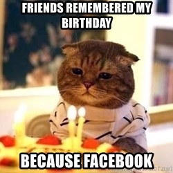 Birthday Cat - Friends remembered my bIrthday Because facebook