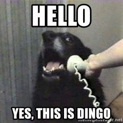 hello? yes this is dog - HEllo yes, this is DINGO