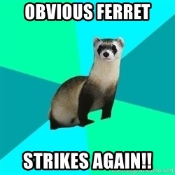 Obvious Question Ferret - OBVIOUS FERRET STRIKES AGAIN!!