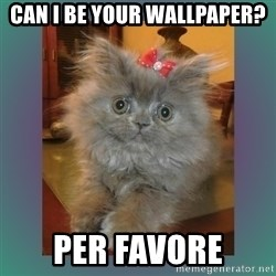 cute cat - CAn i be your wallpaper? Per favore