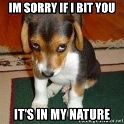 sorry dog - im sorry if i bit you it's in my nature