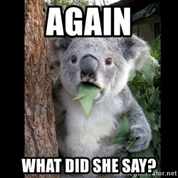 Koala can't believe it - again what did she say?