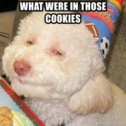 Troll dog - WHAT WERE IN THOSE COOKIES