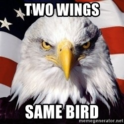 American Pride Eagle - two wings same bird
