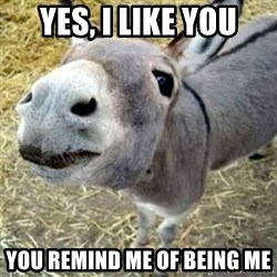 Assumptions Donkey - yes, i like you you remind me of being me