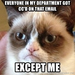Angry Cat Meme - everyone in my department got cc'd on that email except me